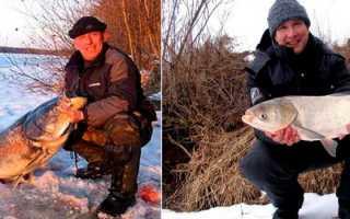 Как поймать толстолобика зимой. Ловля толстолобика зимой