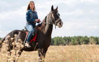 Скакать на лошади во сне — что ждет в реальной жизни? К чему снится Лошадь. Значение сна – Ехать верхом