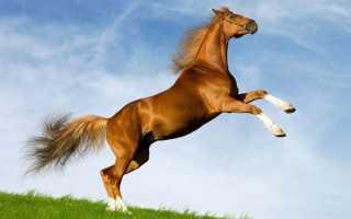 Люди рожденные в год лошади какие они. Зеленая Деревянная Лошадь