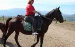 Конные походы по крыму. Конные туры в Крыму – незабываемые приключения
