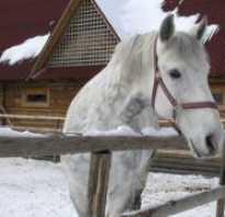 Зимняя фотосессия с лошадьми зимой. Фотосессия с лошадьми