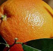 Мандарины: чем полезны и вредны для похудения? Эффективны ли мандарины для похудения.