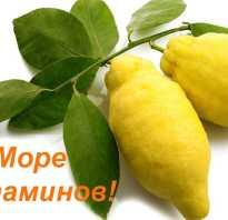 Как лимон сжигает жиры. Лимон сжигает жиры