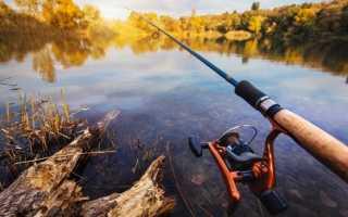 Бизнес организация платной рыбалки. Создание платного пруда