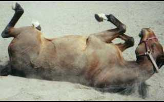 Где конь не валялся. Откуда пошло выражение «ещё конь не валялся»