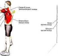 Широчайшая мышца спины болит причины. Почему болят мышцы спины и что можно предпринять