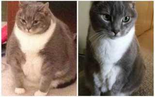 Истории толстых людей которые похудели. Похудевшие люди: фото до и после похудения