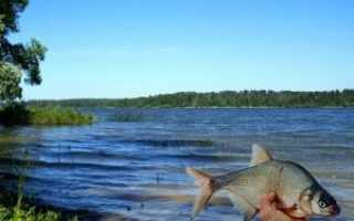 Истринское водохранилище рыбалка на спиннинг. Истринское водохранилище — рыбалка мечты