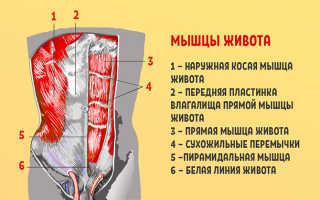 Золотое упражнение пилатеса сотня для всех мышц брюшной полости. Упражнение для плоского пресса «Сотня» (The Hundred)