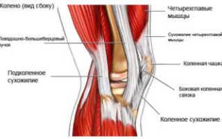 Подколенное сухожилие. Почему болят сухожилия под коленом и как от этого избавиться
