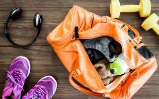 Как правильно заниматься в тренажерном зале начинающим?
