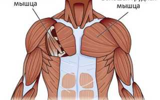 Растянуть грудные. Малая грудная мышца упражнения