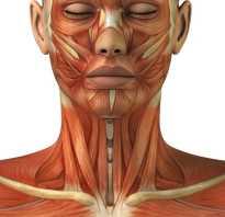 Расслабить мышцы шеи в домашних условиях. Как расслаблять мышцы шеи: способы снять напряжение, упражнения и рекомендации специалистов