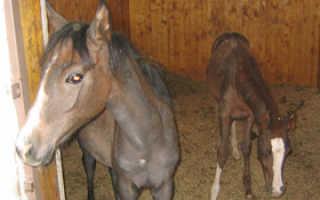 Как ухаживать за лошадью в домашних условиях. Соблюдаем режим питания