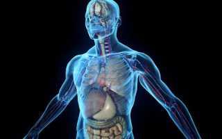 Как влияют здоровье анаболические препараты. Какое действие анаболики оказывают на человеческий организм