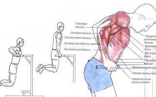 Как сделать руки тоньше упражнения. Эффективные упражнения для похудения рук — тренировка в домашних условиях и в тренажерном зале