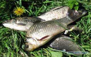 Как называется ловля рыбы руками. Ловля рыбы руками
