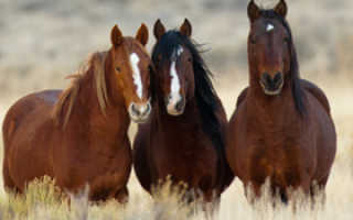Сколько живут лошади и как определить их возраст.
