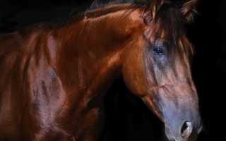 К чему снится красивая коричневая лошадь. Кормить лошадь хлебом во сне