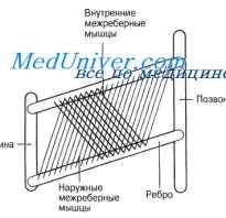 Механизм лёгочной вентиляции. Лёгочный резистанс и комплаенс