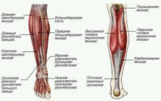 Упражнения для удлинения ног без операции. Вытянуть ноги без операции